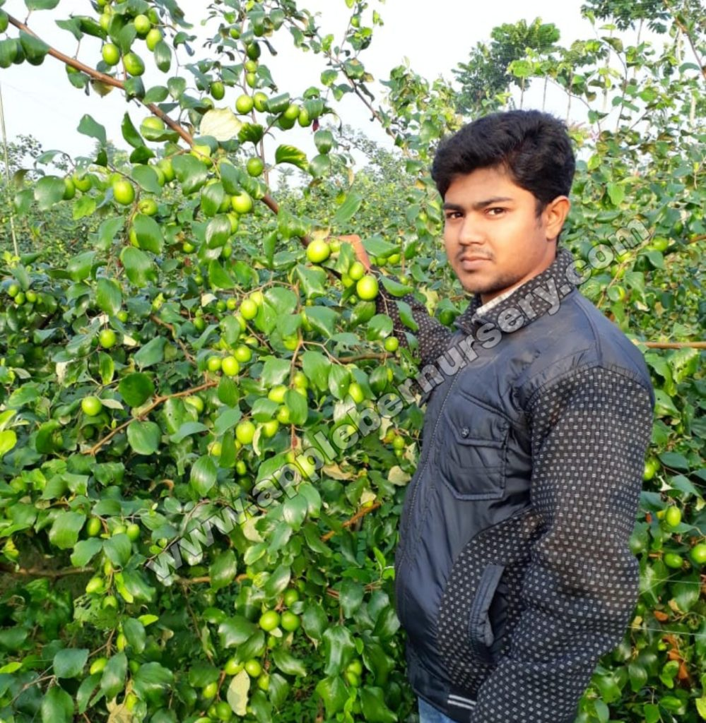 Apple ber Farming