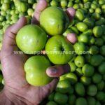 Apple ber fruit