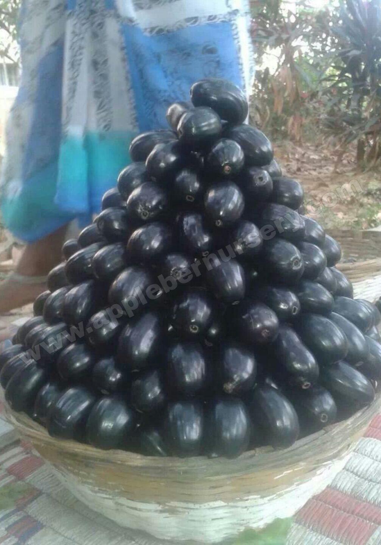 Black Jamun Fruit
